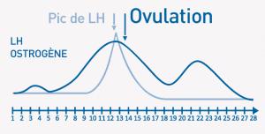 Le principe de l'ovulation